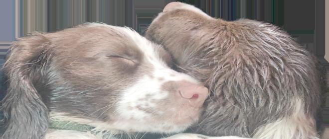 doggy cuddles