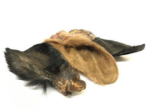 furry cow ears