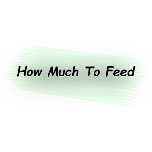 How Much To feed